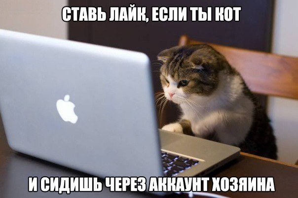 100 % поставишь LIKE)