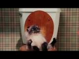 кинокомедиямомент с котом