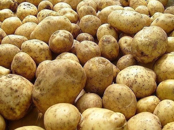 Болезни картофеля и как с ними бороться