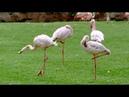 Лоро Парк. Тенерифе.11 серия. Диалоги о животных.