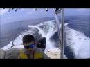 6 11 14 Surfside run no fish