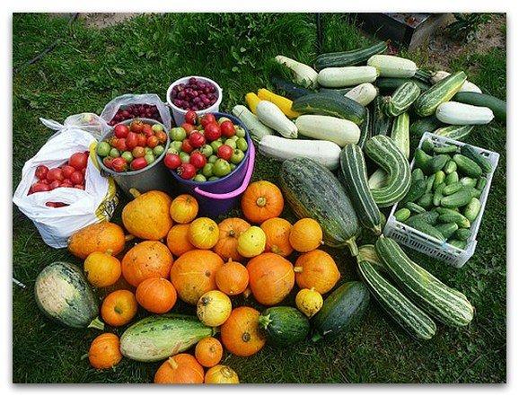 Как удвоить урожай