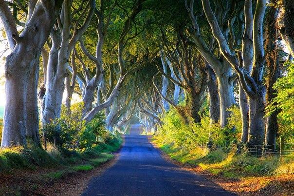 """""""Темная аллея"""" на рассвете, Северная  Ирландия"""