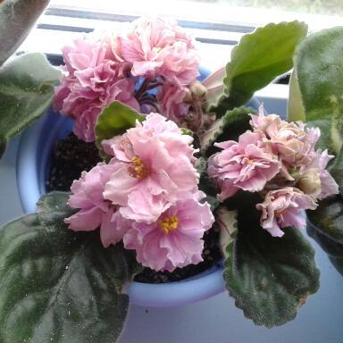 Цветы у Ликки JF1tEi8mC1M