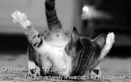 Звери в теме;) - Страница 4 4-xnGYmd8-Y