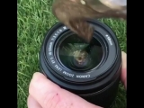 Do you think this is a rented lens