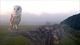 Robert E Fuller Barn owl flies out of the mist