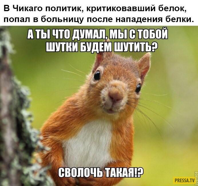 https://pp.userapi.com/c852024/v852024729/11691/Nk-lITsVtAA.jpg