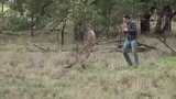 Man punches a kangaroo in the face to rescue his dog (ONEPUNCH)