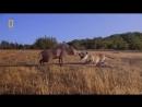 Доисторический мир Древние животные Энтелодонт Документальный фильм National Geo