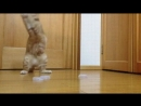 кот голкипер