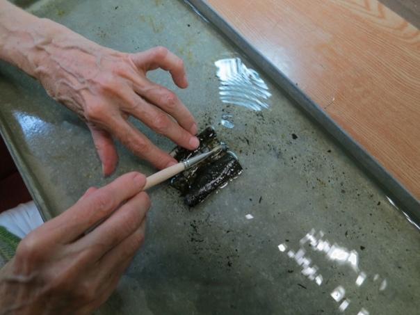 В Великом Новгороде обнаружены новые берестяные грамоты