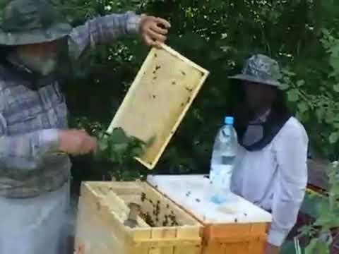 пчеловодство azov pchel откачка мёда с 6 ти рамочных ульев