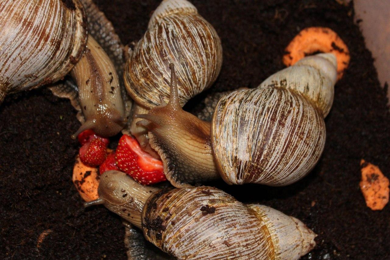 ~liquid snails~ - Страница 18 Lz5c9SrchH0