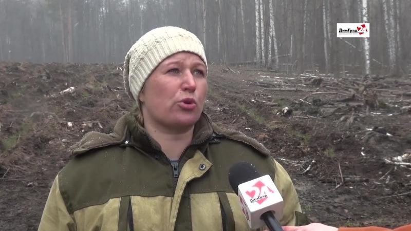 В Мелекесском районе начался сезон восстановления леса