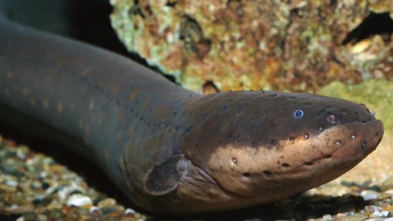 9 настоящих монстров, которые обитают в реках