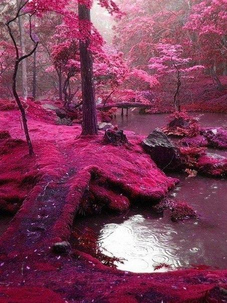 Лес в Ирландии.