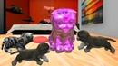 СИМУЛЯТОР КОТА 🐱🐱🐱 18 ИГРАЕМ С КОТЯТАМИ мульт-игра про котят развлекательное видео
