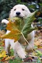 Время падающих листьев, теплых пледов, вкусного кофе с шоколадом, яблочных пирогов…