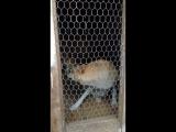 20180614_200251 Собаки- Забияки