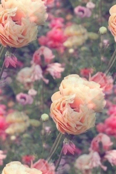 Цветочные и растительные фоны - Страница 3 LMwJy7EPz64