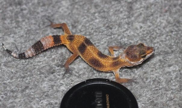 Различные рептилии P5BWtW28bBY