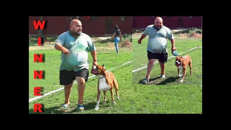 Трудно стать Чемпионом на выставке собак. IIts hard to become a Champion at an exhibition of dogs.
