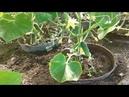 Наш участок: картошка ,парники,цветы,сад и многое другое!