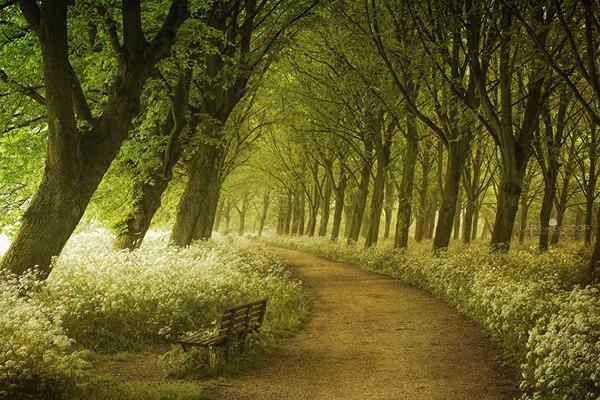 Весенний путь, Голландия