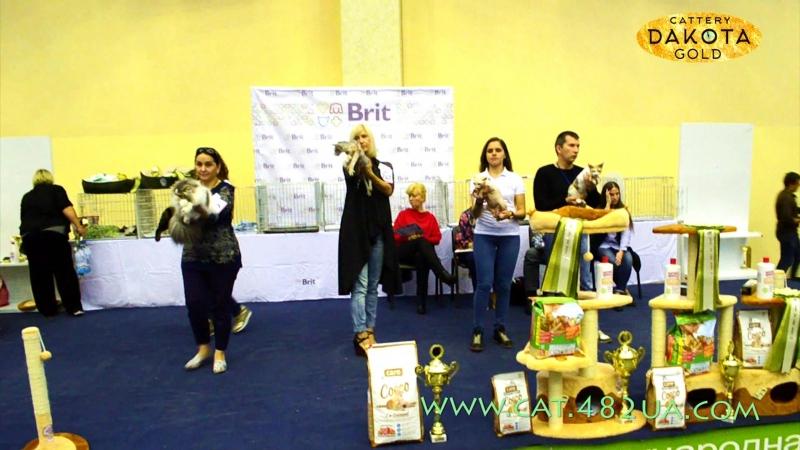 Best Шоу, Харьков, Международная выставка кошек и котов, 18 сентября, 2016, часть 3
