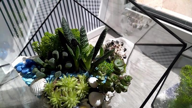 флорариумы = геометрия природа