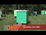 Правильные пчелы дают правильный мед: пчеловод из Альметьевского района рассказал о своем ремесле