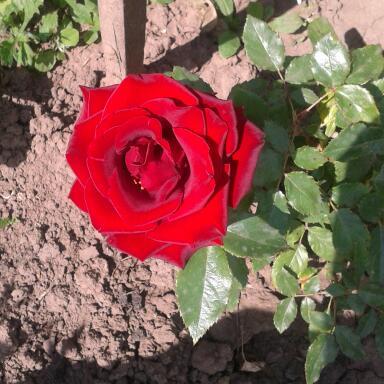 Цветы у Ликки Hh0ALn9-s3U