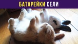 Приколы с животными. Батарейки сели Мемозг #44