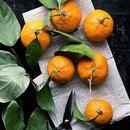 Зимой, без них ну никак не обойтись! Мандаринки или апельсинки?
