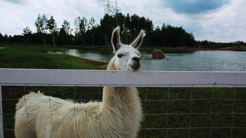 Visiting the Lithuanian Zoo Dubingių Žirgynas