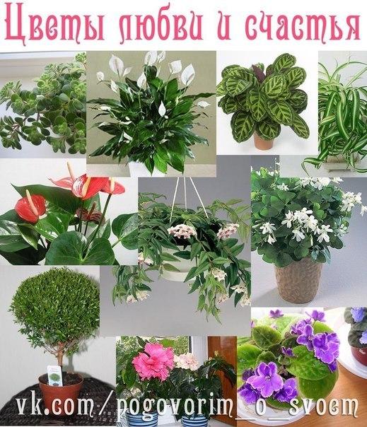 крупных машин какие комнатные растения дарить мужчине (Курский вокзал) Петушки