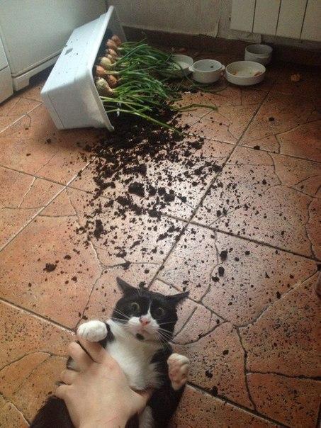 Влип котяра! , веселые, шуточные и прикольные частушки. Веселые