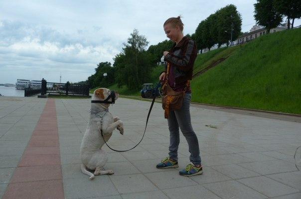 Ошейник-уздечка для собаки - Ярпортал, форум Ярославля