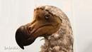 7 Animales que el hombre matô hasta extinguirlos