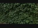 Robs Grote Tuin Verbouwing Bij Avegoor Deel 09 (By SBS 06 SBS 09 INC. LTD.)