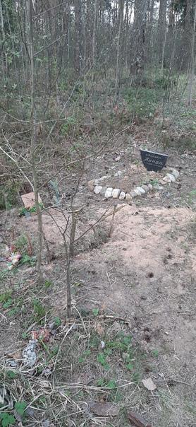 Кладбище домашних животных образовалось на окраине Витебска. Уместно ли такое кладбище рядом с зоной отдыха в лесу: