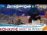В Тверь приедут дельфины и морские котики