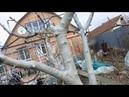ПОБЕЛКА ДЕРЕВЬЕВ Супер стойкая побелка деревьев ранней весной с с медным купаросом