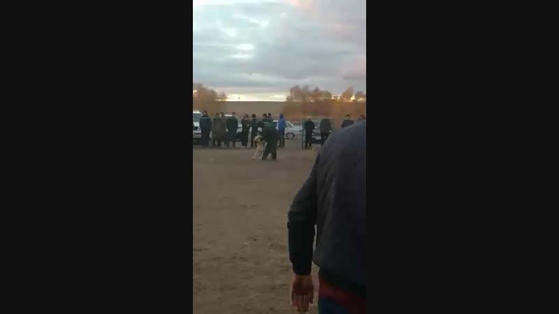 Каракоз Актобе сары Татарстан