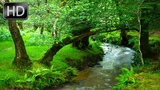 Nature Sounds Creek, Forest, Birds Song. 1 Hour of Relaxation for Stress Relief and Sleep