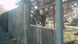 Крассивый забор дёшево из поддонов ,палет своими руками.