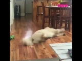 Собака бегает во сне