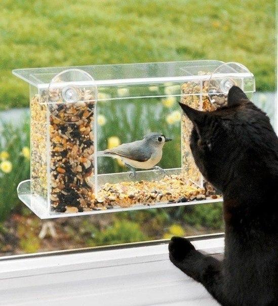 Скворечник , который можно прикрепить к окну и любоваться птичками