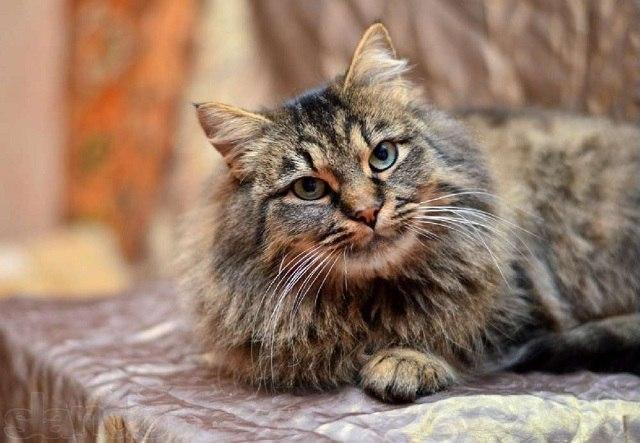 метисы фото кошки